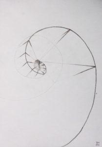 Drawing: Embryo Spiral